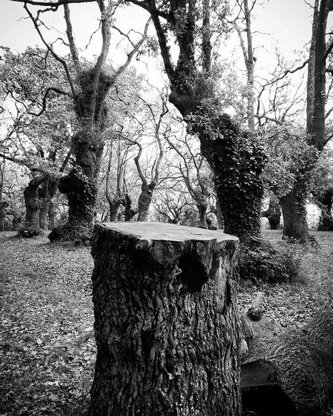 Jardinbotanico Jardinbotanicogijon Garden Tree Trees árbol Arboles Ghost Ghosts Fantasmas Willowisp Fuegofatuo Nature Natural Naturaleza