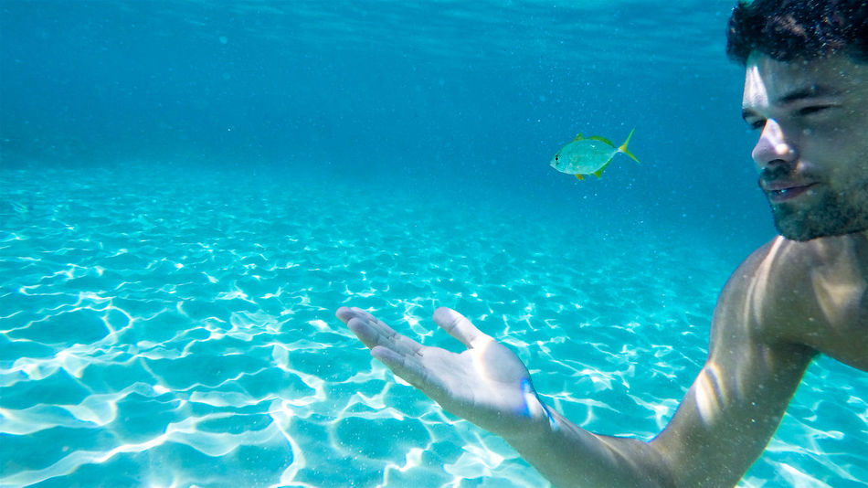 Beautiful stock photos of fisch, water, blue, leisure activity, lifestyles