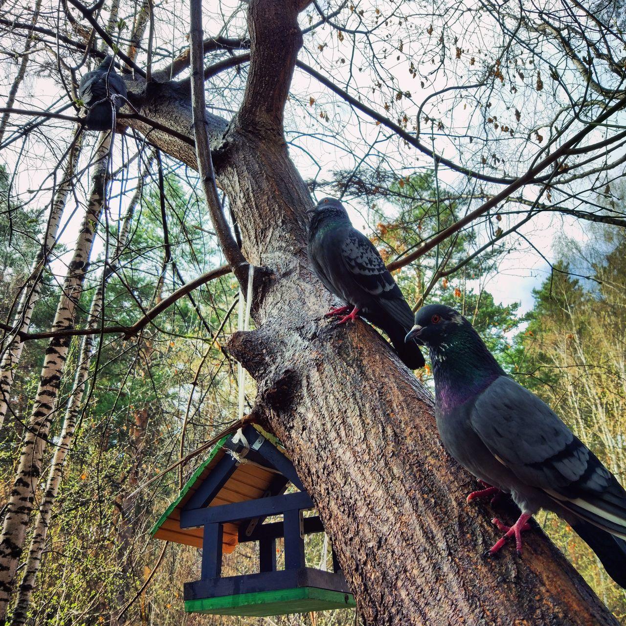 Bird Animal Themes Animals In The Wild Tree Day Outdoors Sky No People Nature Novosibirsk Новосибирск кормушкадляптиц кормушка Animal береза голуби The Week On EyeEem