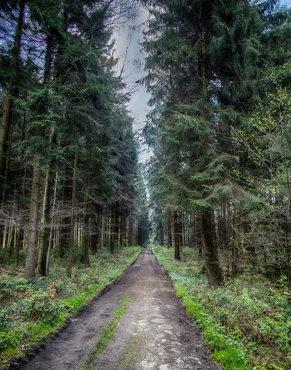 Beauty In Nature Day Forest Grass Growth Nature No People Outdoors Scenics Sky The Way Forward Tranquil Scene Tranquility Tree Plant Freshness Saturday Woodpile EyeEm Nature Lover EyeEm Best Shots Landscape Life In Colors Forest Photography Forest Trees Amazing