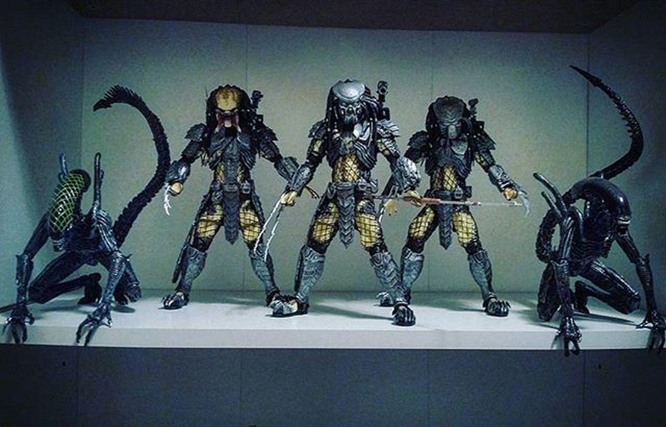 AVP Neca Alien Aliens Xenomorph Predator Alienvspredator Avp Toys Toysaremydrug
