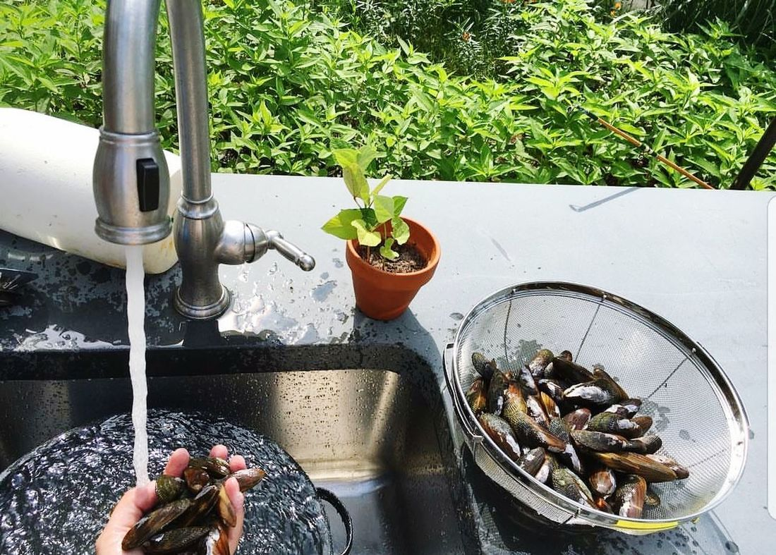Cleaning Mussels Human Hand Human Body Part Water One Person Day Lifestyles Outdoors People Nature Seafoods Fresh Catch Plant Real People Adult Close-up Greenhouse