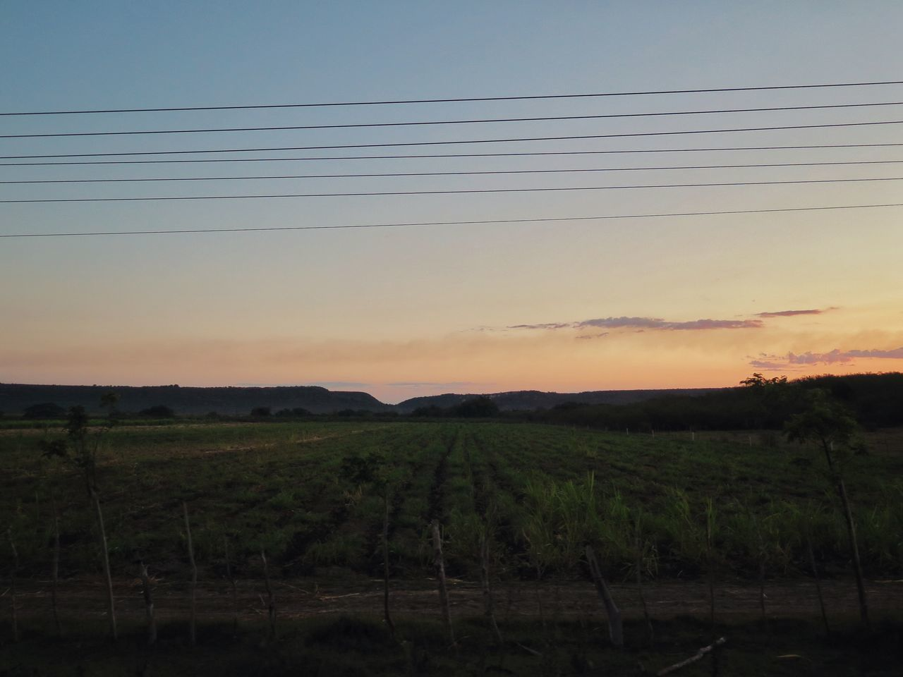 sunset, field, nature, tranquility, scenics, landscape, tranquil scene, agriculture, no people, beauty in nature, cable, outdoors, sky, rural scene, growth, electricity pylon, day