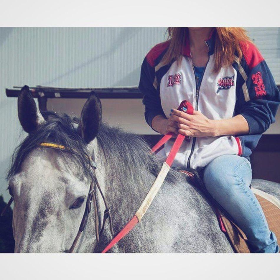 Ne dam nikom ☺ 💖💞💕❤💝💘🏇 Instagram Instahorse Thoroughbredlove Thoroughbredsofinstagram thoroughbred purasangreinglés psi caballo caballosdeinstagram tuttoilmiomondo tuttalavita oneandonly heart life vivreetlaisservivre sempreinsieme