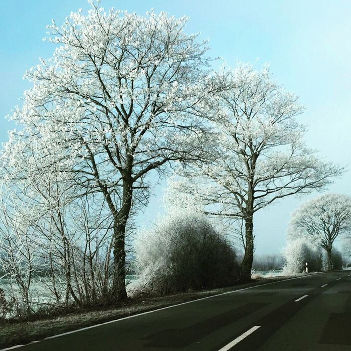 Road Tree Frozen Nature Frozentree Nature Outdoors Beauty In Nature Clear Sky