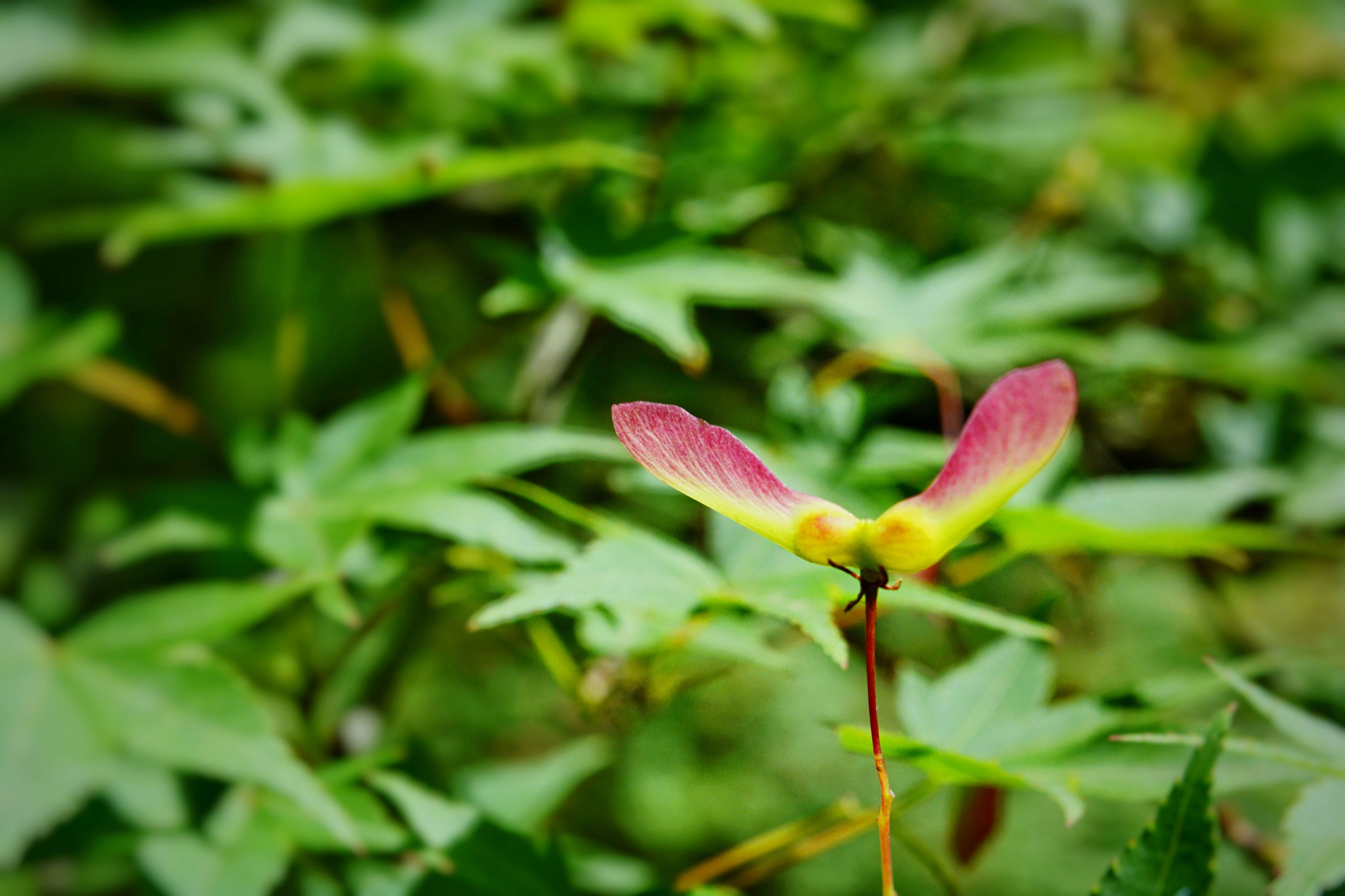 flower, growth, freshness, plant, focus on foreground, fragility, petal, beauty in nature, nature, stem, bud, close-up, green color, flower head, leaf, blooming, new life, selective focus, day, beginnings