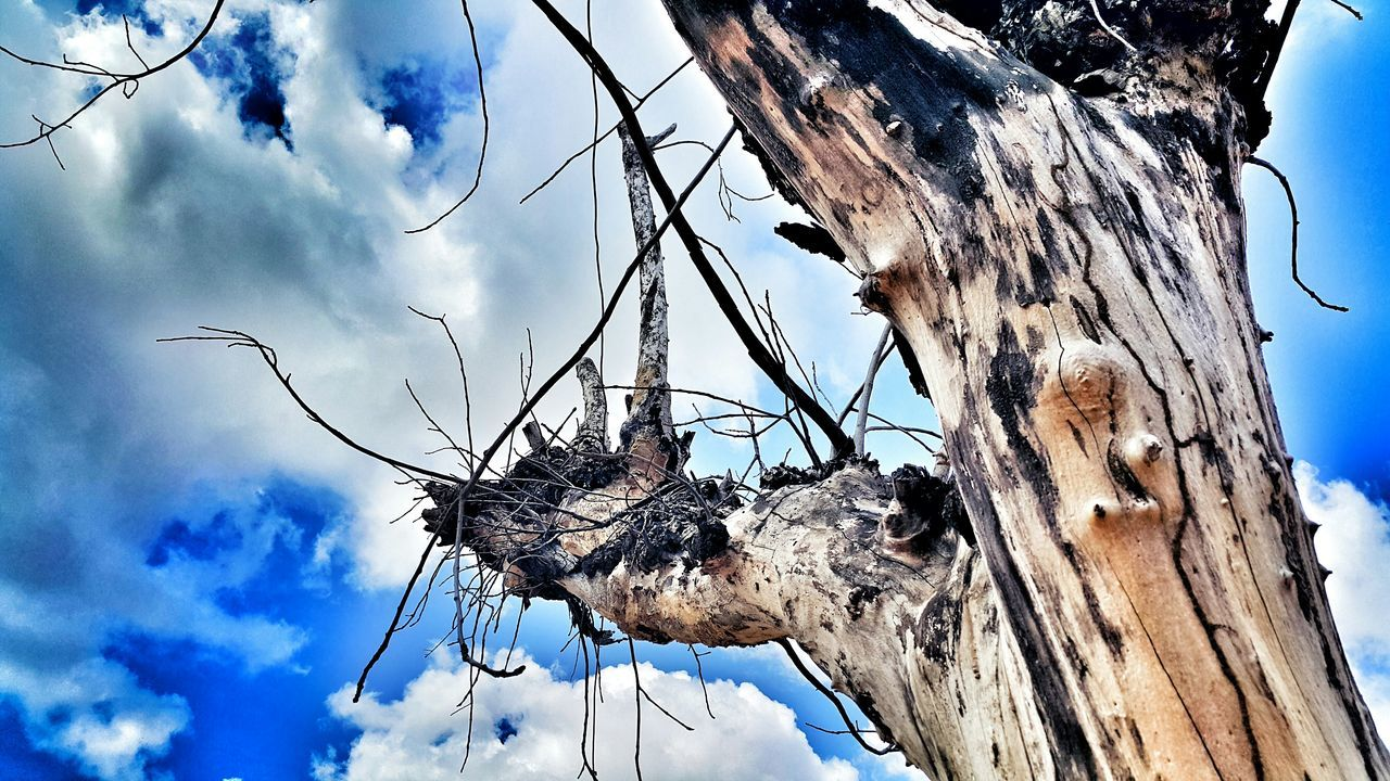 low angle view, tree, sky, day, cloud - sky, tree trunk, outdoors, bare tree, dead plant, no people, nature, dried plant, branch, dead tree, close-up