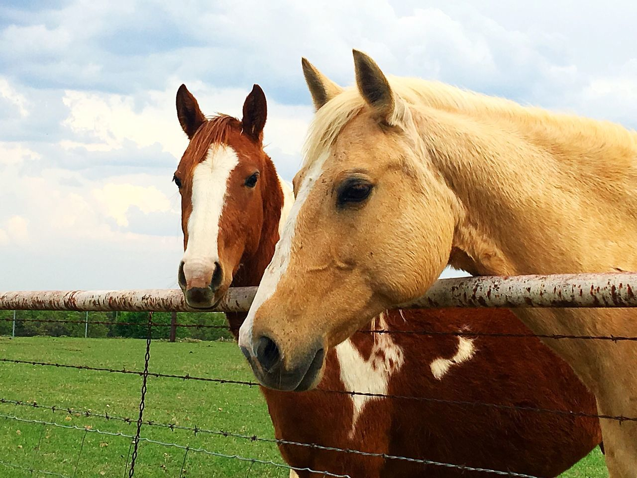 Horses Horse Photography  Countryside Backroads IPhone IPhoneography Pasture Fence Horse Domestic Animals Animal Themes Sky Herbivorous Mammal Livestock Standing Brown Outdoors Field No People Paddock Day Grass Togetherness Nature Close-up