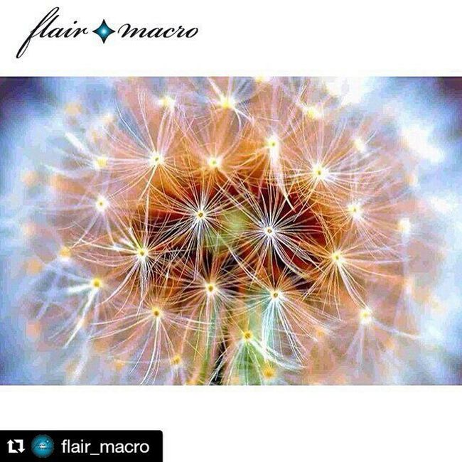 Repost @flair_macro with @repostapp ・・・ . 🌱🌀💚🌀🌱@flair_macro🌱🌀💚🌀🌱 🌱🌀🌱Today's Featured Artist!🌱🌀🌱 🌱🌀🌱💚🌱🌀🌱💚🌱🌀🌱💚🌱🌀🌱 . . 🌱🌀🔎@msadikun🔍🌀🌱 . Please visit the artist's gallery to connect, appreciate and congratulate. . 🌱🌀🌱💚🌱🌀🌱💚🌱🌀🌱💚🌱🌀🌱 . Selected by @marianloe . Fancy a feature? Be sure you're following @flair_macro and tagging your best photos to Photoflair_macro . 🌱🌀🌱💚🌱🌀🌱💚🌱🌀🌱💚🌱🌀🌱 . @flair_macro team: @ssazjad, @marianloe, & @roselito . 🌱🌀🌱💚🌱🌀🌱💚🌱🌀🌱💚🌱🌀🌱 . Follow @flair_main. Tag Ig_photoflair . . 🌱🌀🌱💚🌱🌀🌱💚🌱🌀🌱💚🌱🌀🌱 . Photos are tested with ©tineye for authenticity. If you've collaborated in any way please be sure to give credit. ------------------------------------------------ Ig_closeups Rsa_macro Macro_holic Macro_secrets Tgif_macro My_daily_macro Smallworld_uc Macro_perfection Macro_spotlight Macrostalking Hdmacros Macroclique Macromood Macro_highlight Igtube_macro Excellent_macros Jpn_macro Simpley_perfection Amazing_macro_ Fabmacro Rebelmacro Ig_captures igelinesia_macro icu_macro 1001macro macroexperience unreal_macro Thank you @flair_macro and @marianloe for selecting and featuring this picture. I am honored 😊