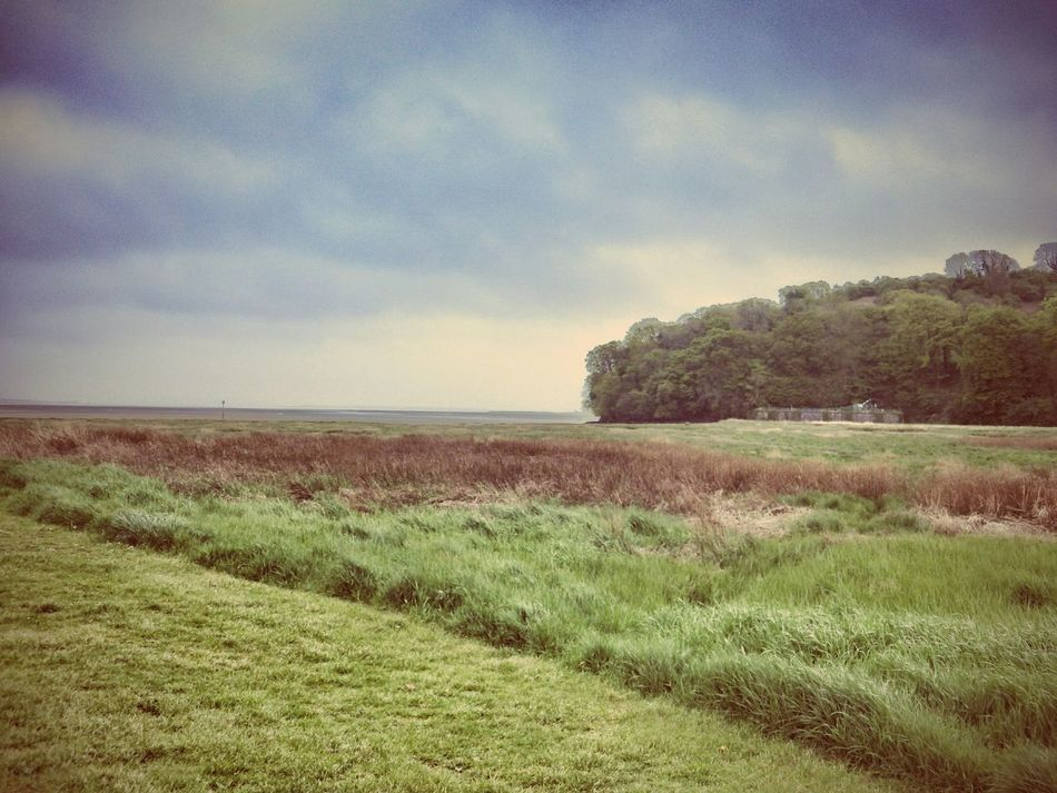 Wales Taking Photos Photography Landscape Grass Green Trees Landscape_photography Horizon Check This Out