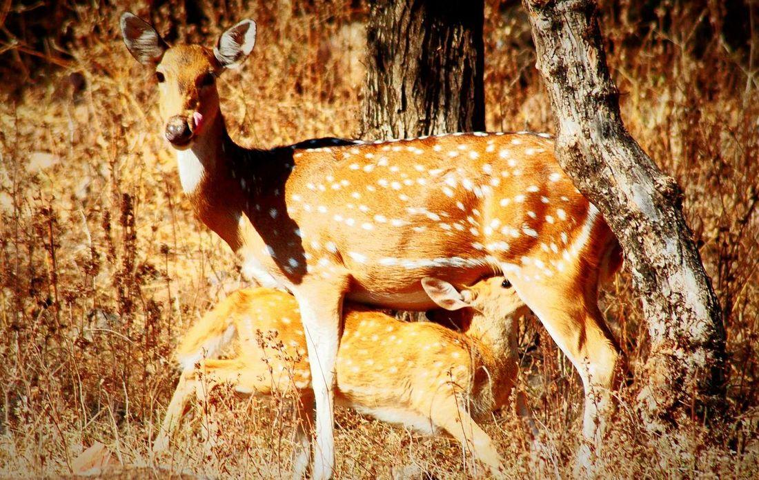 Madhav national park shivpuri (m.p.) First Eyeem Photo