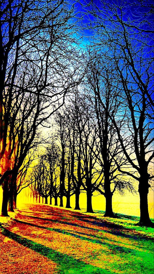 Nature Decksteinerweiher Cologne , Köln,  Alley Running Around Trees Good Morning World! The Great Outdoors - 2016 EyeEm Awards