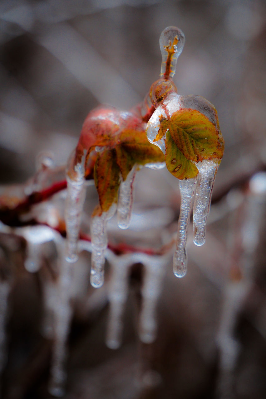 close-up, no people, cold temperature, focus on foreground, ice, nature, frozen, fragility, winter, beauty in nature, outdoors, day