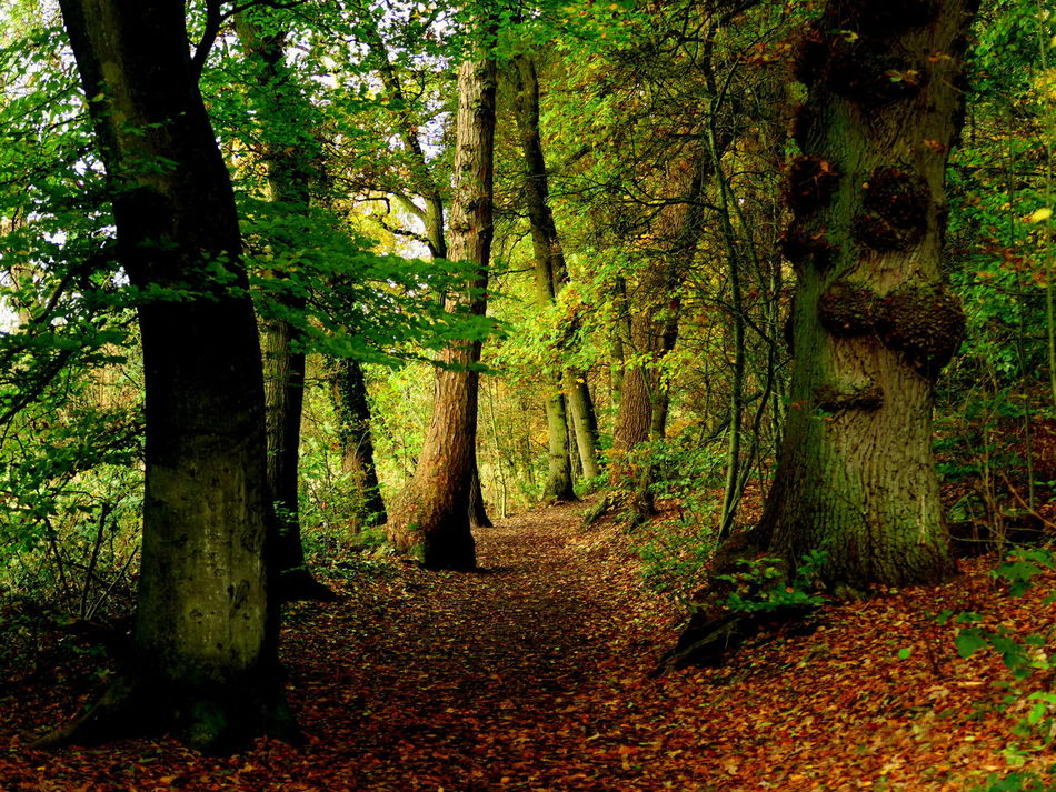 Went walking in these spooky old woods alone.. Autumn Autumn Collection Autumn Colors Beauty In Nature Brook Creek Creekside Day Forest Forest Photography Forestwalk Growth In The Woods Nature No People Outdoors Reflections Reflections In The Water Scenics Stream Streaming Tranquil Scene Tranquility Tree Woods