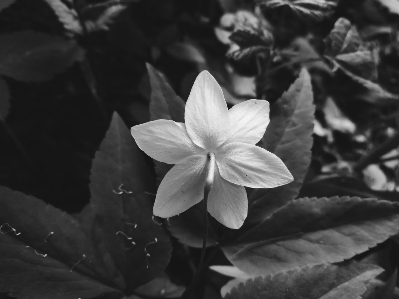 EyeEm Gallery EyeEm Masterclass Flower Head Beauty In Nature Fragility Close-up Blossom Nature Freshness Outdoors Flower The Great Outdoors - 2017 EyeEm Awards Something Different Neighborhood Map Outdoor Photography EyeEm Best Shots Eye4photography  EyEmNewHere Blackandwhite EyeEm Best Shots - Nature Capture The Moment My Unique Style Getting Inspired EyeEm Nature Photography Fresh On Eyeem