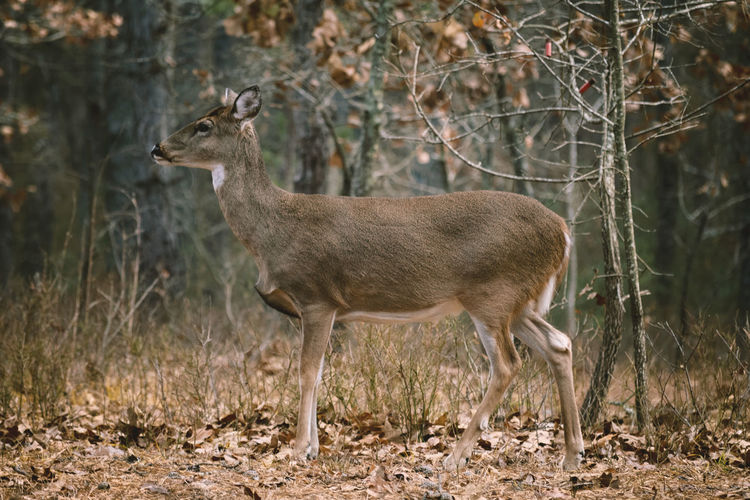 Deer Animal Woods Forest Trees No People Outdoors Nature