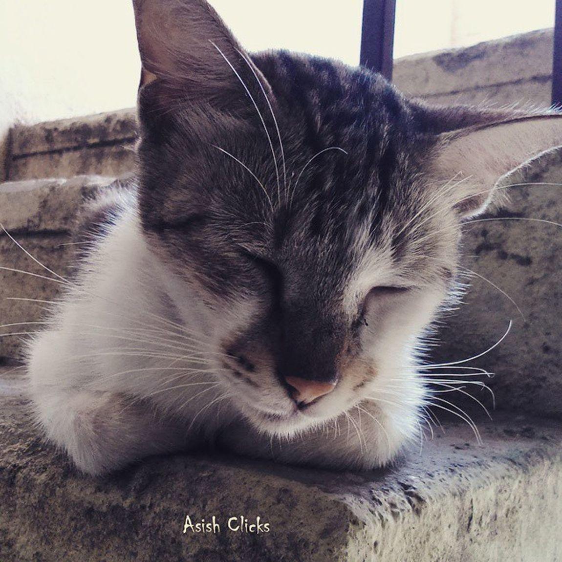 Puchu - my cat :) Cat Pet Love Cute Lovable Animals Peta Thepound Bluecross Cats Cutiepie Adorable Asishclicks