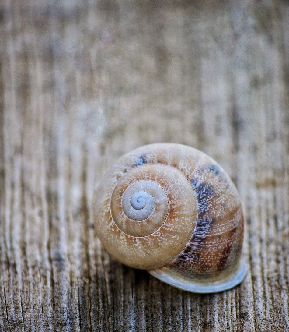 Shell Close-up Textured  One Animal Nature Gastropod Animal Themes Snail Snail Collection Snailshell Snail🐌 Snails Snail Shell Snail Photography Snail Closeup Snail Shells Snail Shell Close Up Snail ❤ EyeEm EyeEm Best Shots Eyeem Snail Close Up Closeup Close Up Photography Close Up Snail