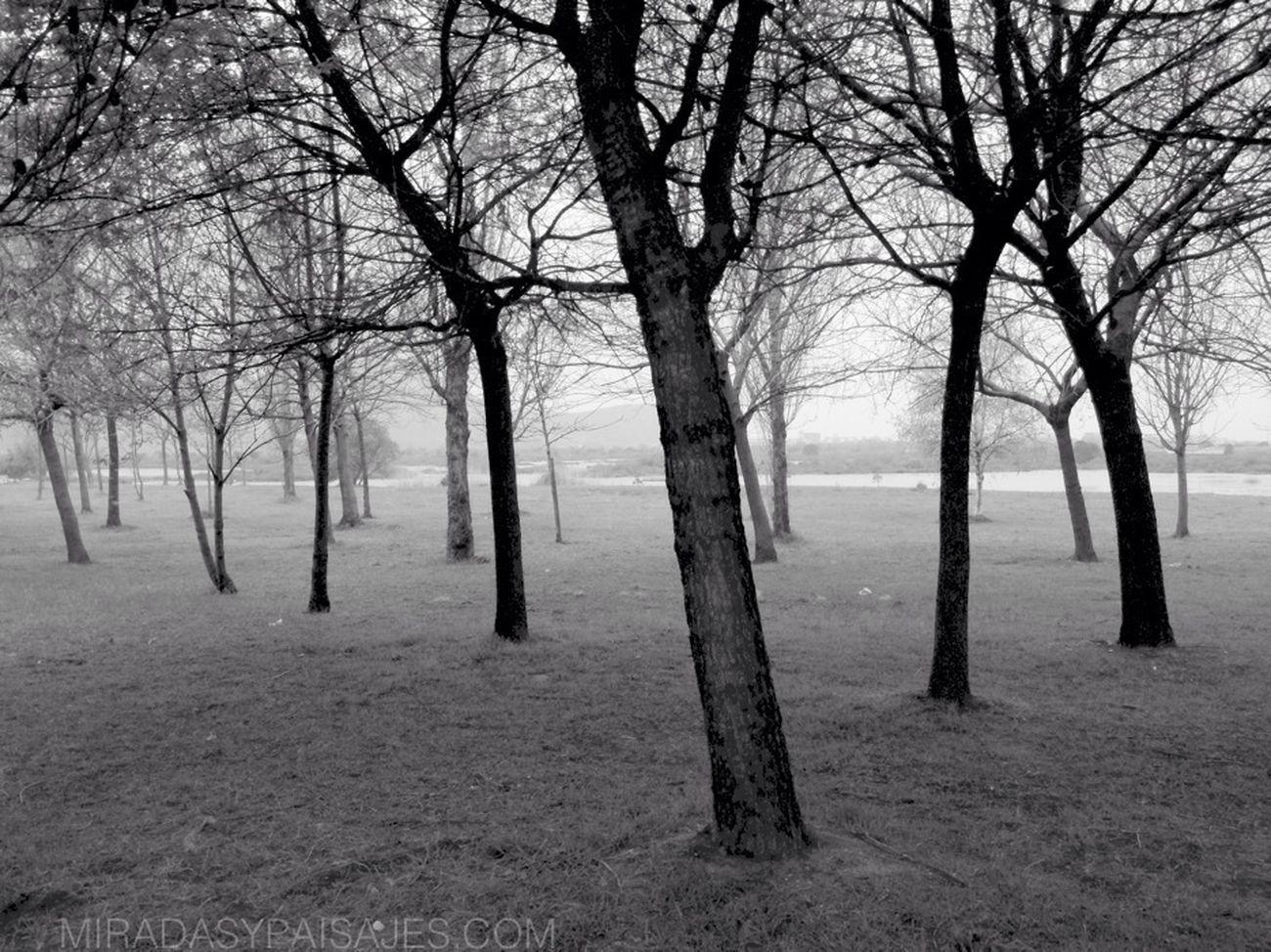 Blackandwhite Landscape AMPt_community EyeEm Best Shots