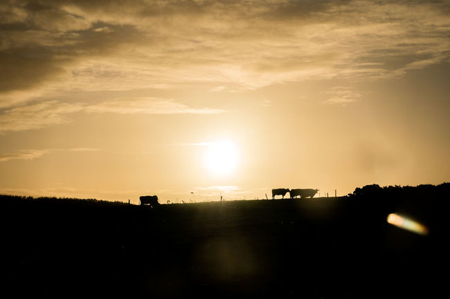 Beauty In Nature Bright Calm Cloud Cloud - Sky Cows Dramatic Sky Horizon Over Land Majestic Moody Sky Nature No People Non-urban Scene Outdoors Outline Scenics Silhouette Sky Slihouettes Sun Sunbeam Sunlight Sunset Tranquil Scene Tranquility The Great Outdoors - 2017 EyeEm Awards