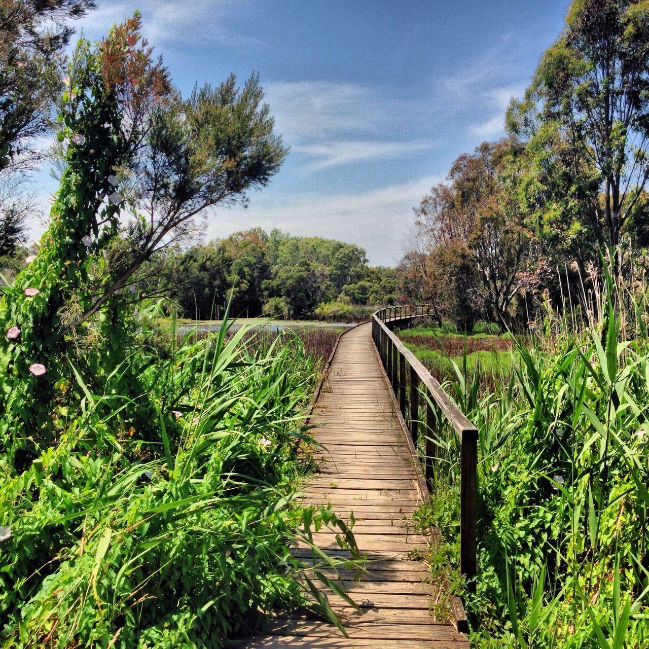 Wetlands Nature Sunshine January Sunshine