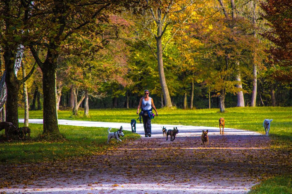 Hunde Liebe ♡ Hunderunde Hundeleben Hundeliebe Hundefotografie Hunde München Memories Natur Pur Natur Bäume Outdoors Tree Herbst Herbststimmung