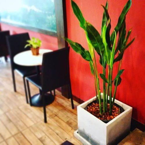 """Everyday, living with a natural :) """"Just the two of us"""" I always love green that one of my favourite colours. Green Cafe Littlesidebehideatown atown Doichang Coffee CoffeeWorld Thailand Interiordesign Architecture"""