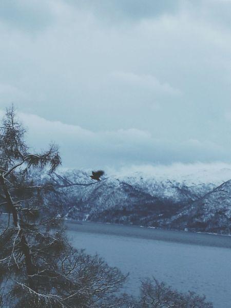 Eagle Winter Blury Norway