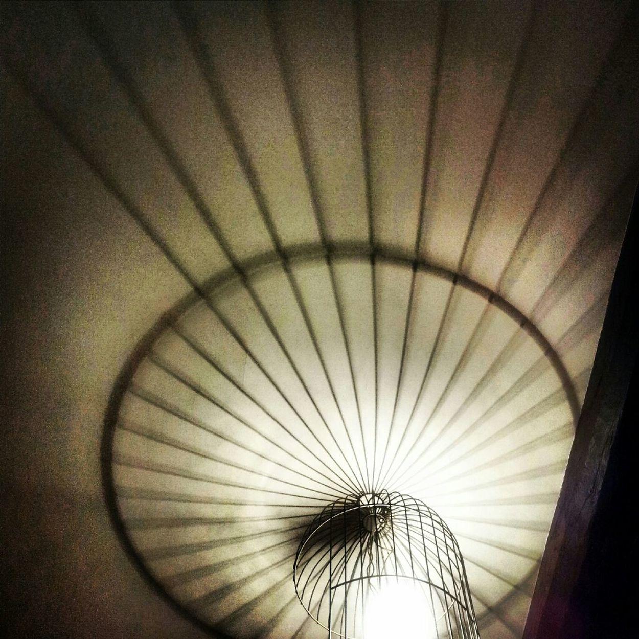 Lights Birdscage