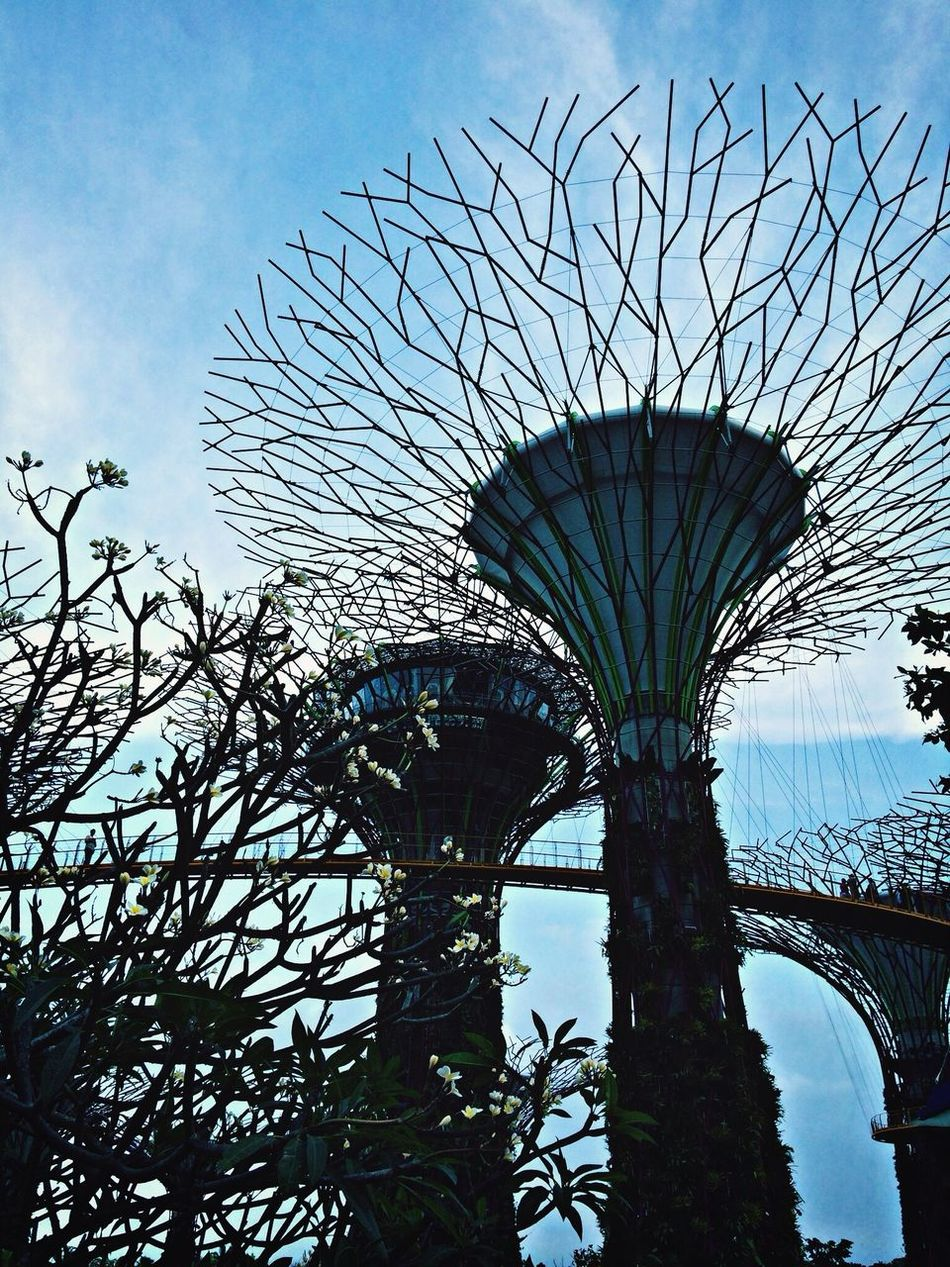 Be Amazed great structure. Garden By The Bay Walking Around Coral Structure Nice Place