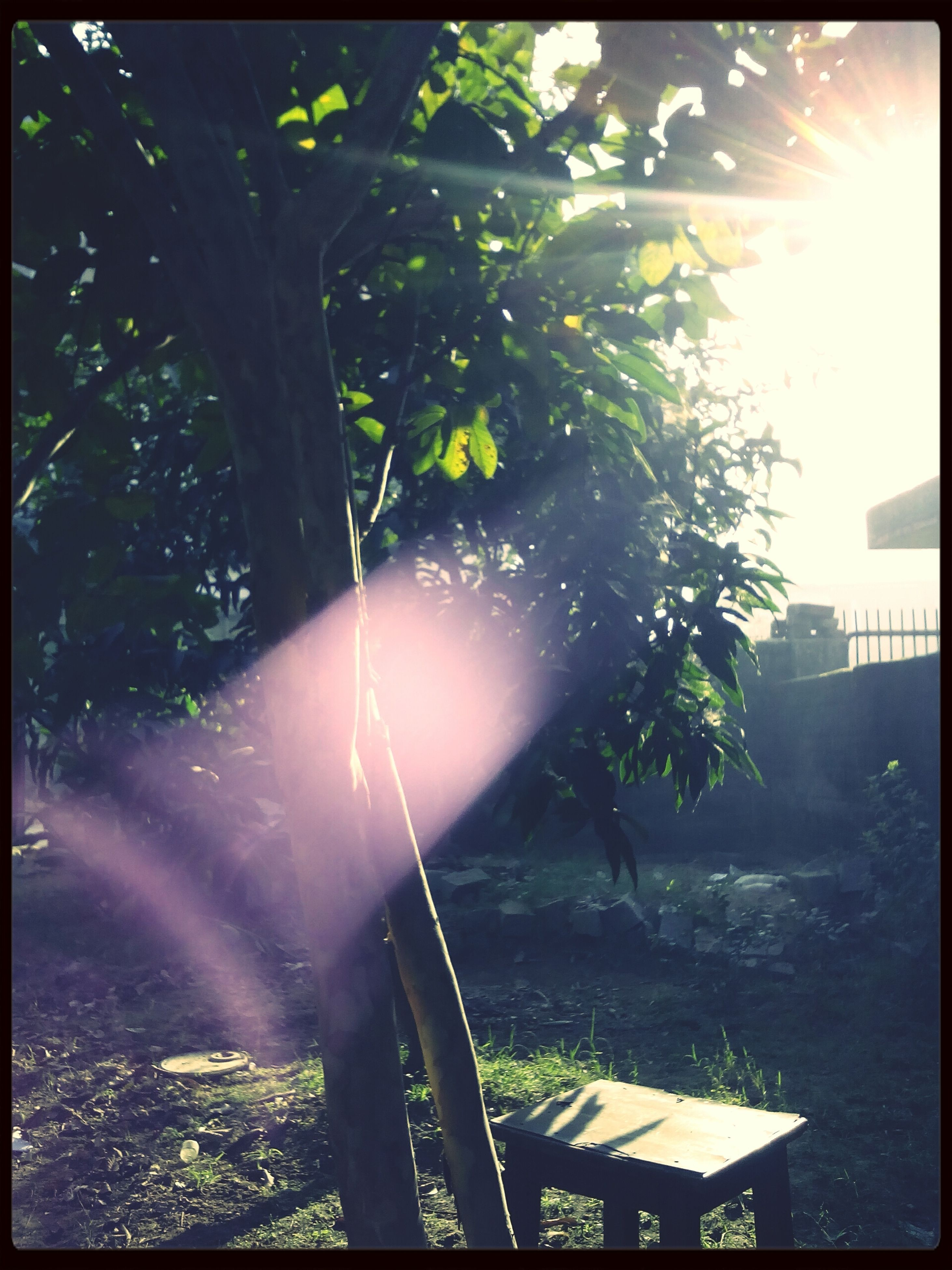 transfer print, sun, tree, sunbeam, sunlight, auto post production filter, lens flare, growth, nature, sunny, branch, bright, day, outdoors, water, tranquility, green color, plant, beauty in nature, back lit