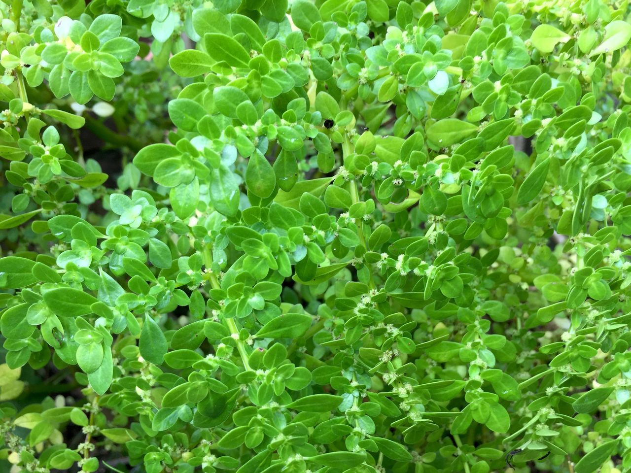 This foliage is call dólar in Brazil, to atract money! Backgrounds Beauty In Nature Close-up Day Dolar Foliage Foliage, Vegetation, Plants, Green, Leaves, Leafage, Undergrowth, Underbrush, Plant Life, Flora Freshness Green Color Growth Leaf Money Nature No People Outdoors Plant
