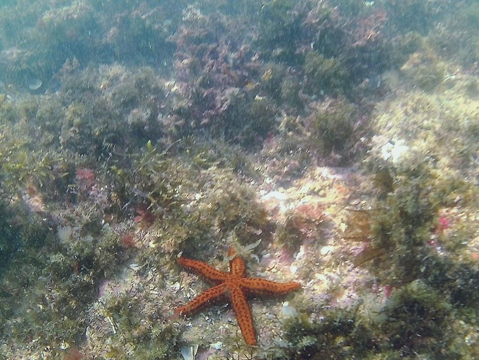 Estreladomar So Beautiful ♥♥ Love It Underwater Waterlove Waterlife