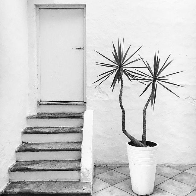 White Style Salento