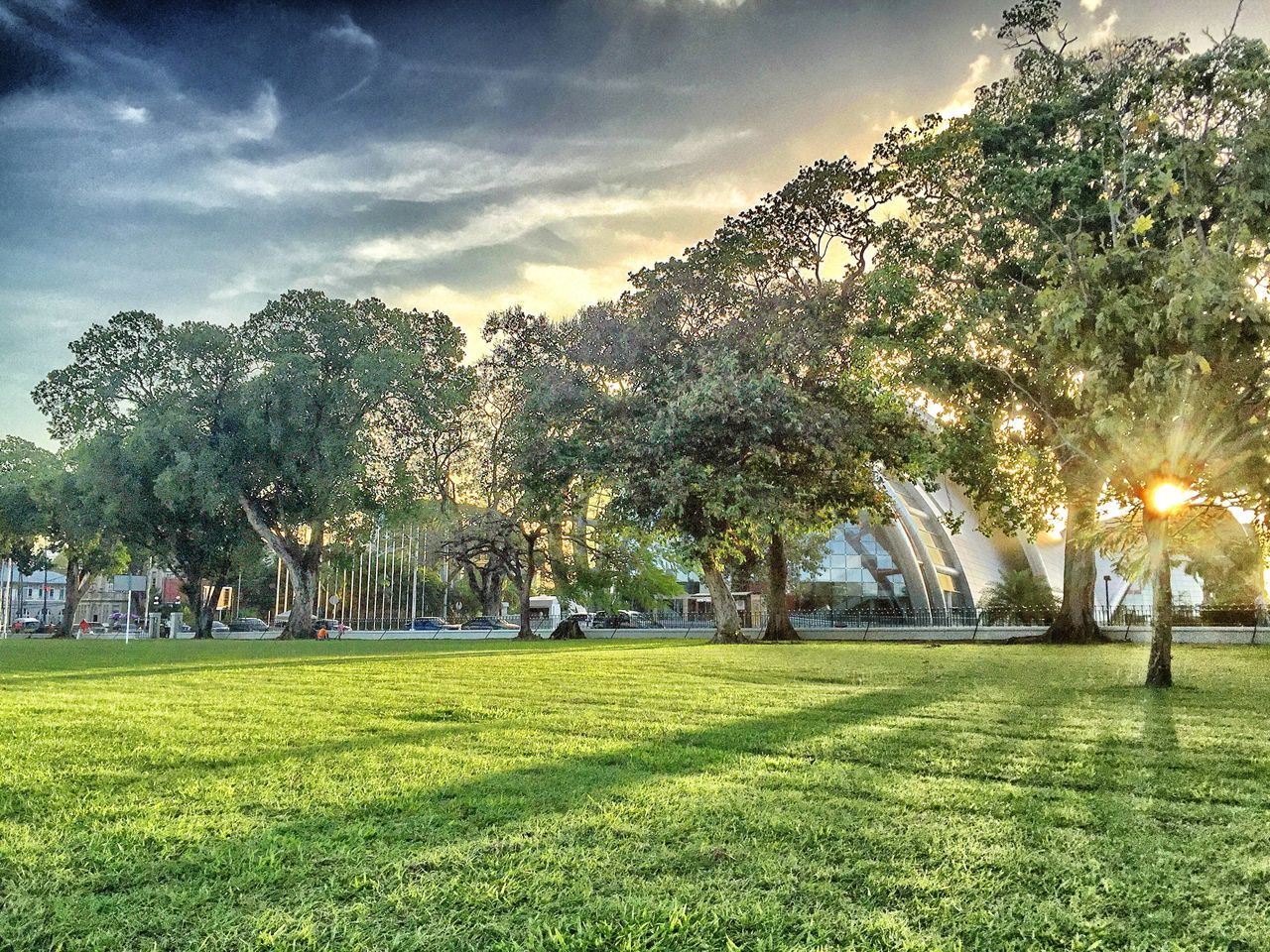 tree, grass, green color, nature, growth, sky, beauty in nature, park - man made space, field, scenics, sunlight, landscape, day, tranquil scene, outdoors, tranquility, large group of people, real people, branch, people
