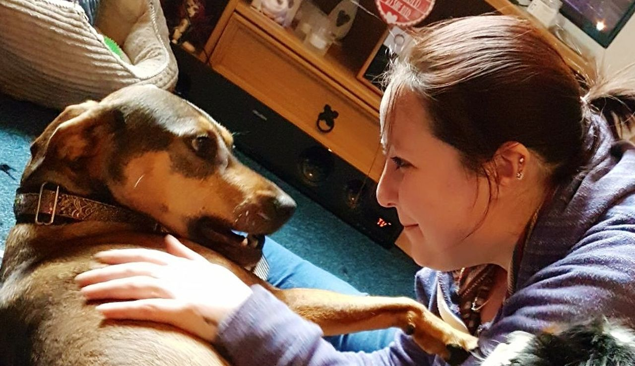 dog, pets, one animal, domestic animals, animal themes, indoors, friendship, mammal, real people, bonding, childhood, one person, beagle, day, child, close-up, young adult, people