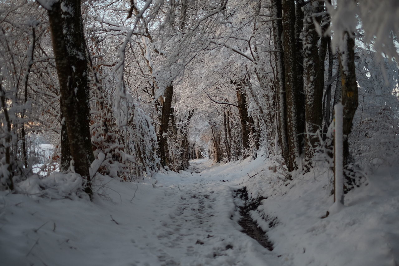 Snow Covered Footpath Amidst Trees