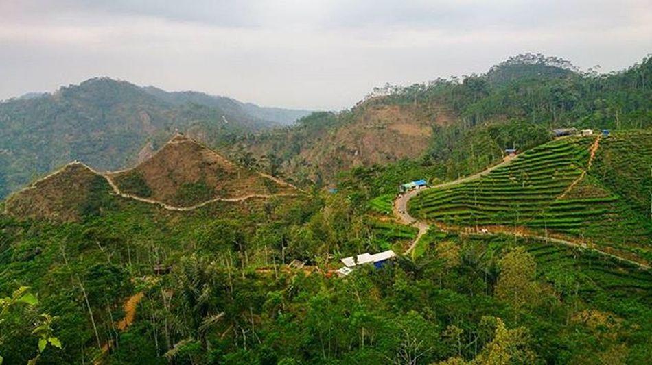 Dekat di mata, jauh di administrasi. Di sebelah kanan adalah kebun teh Nglinggo yang termasuk dalam wilayah kabupaten Kulonprogo, propinsi DIJ. Sementara sebelah kiri adalah Puncak Kemukus-Kendeng yang dimiliki kabupaten Magelang, propinsi Jawa Tengah. Nglinggo dan Kemukus keduanya berada di deretan Perbukitan Menoreh dan menjadi tempat wisata baru yang sedang naik daun beberapa bulan terakhir. Nglinggo Kemukus Kulonprogo Yogya Jogja Magelang Jawatengah INDONESIA Bukit Kebunteh Desawisata Exploreindonesia Instanusantara Pesonaindonesia Wonderfulindonesia