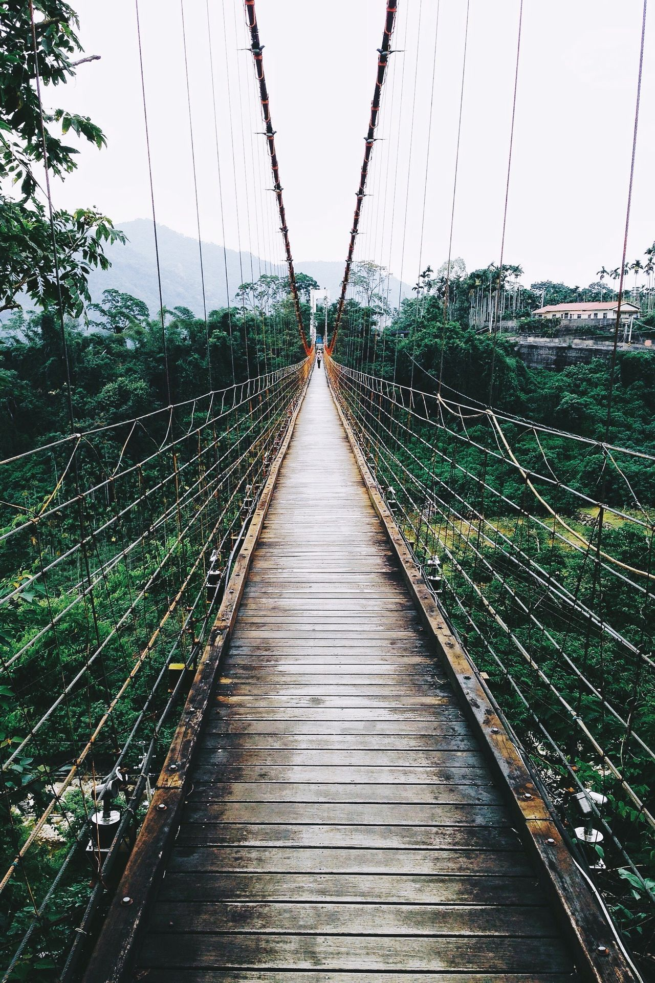 Diminishing Perspective Tree Bridge - Man Made Structure Travel Destinations The Way Forward Nature Taiwan Dschungel Photography Wanderlust