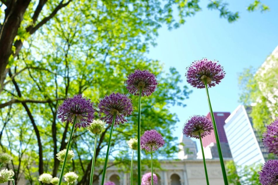 Bliss Why Are You So Beautiful Purple Flower Sky Spring Flower Collection Nature The Great Outdoors - 2016 EyeEm Awards