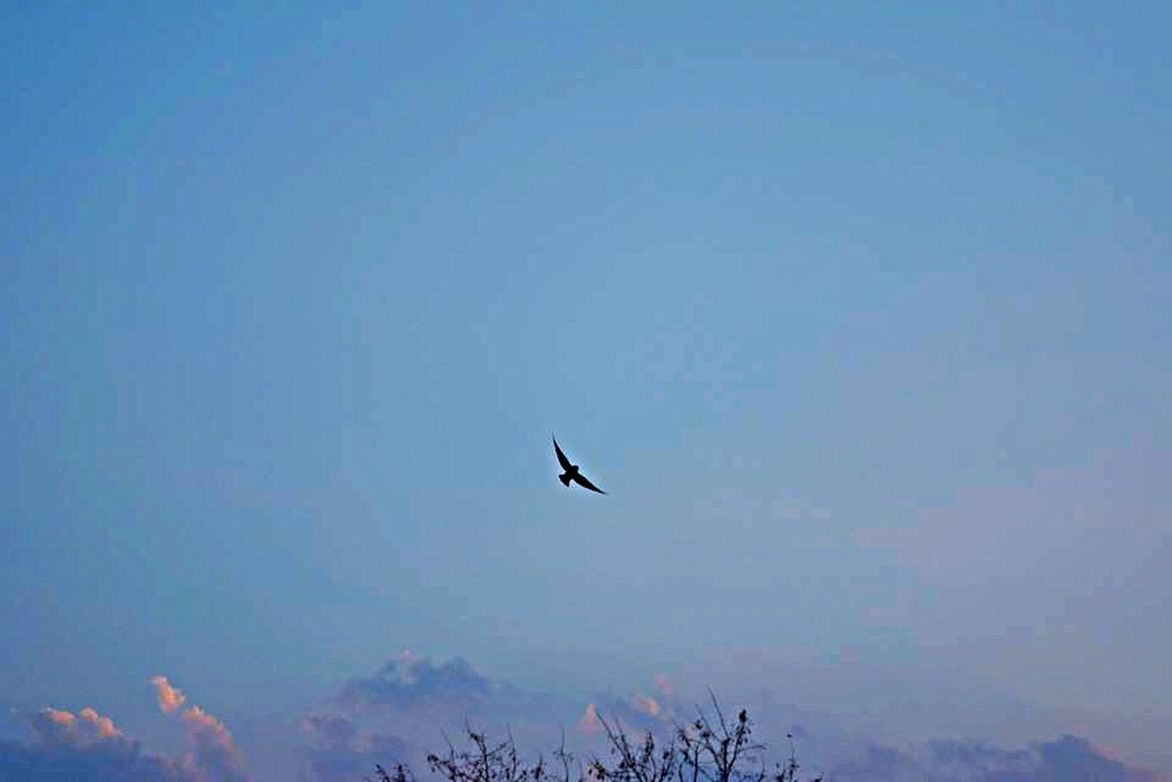 bird, flying, animal themes, animals in the wild, one animal, wildlife, low angle view, mid-air, copy space, spread wings, clear sky, nature, sky, beauty in nature, blue, tranquility, silhouette, scenics, tranquil scene, outdoors