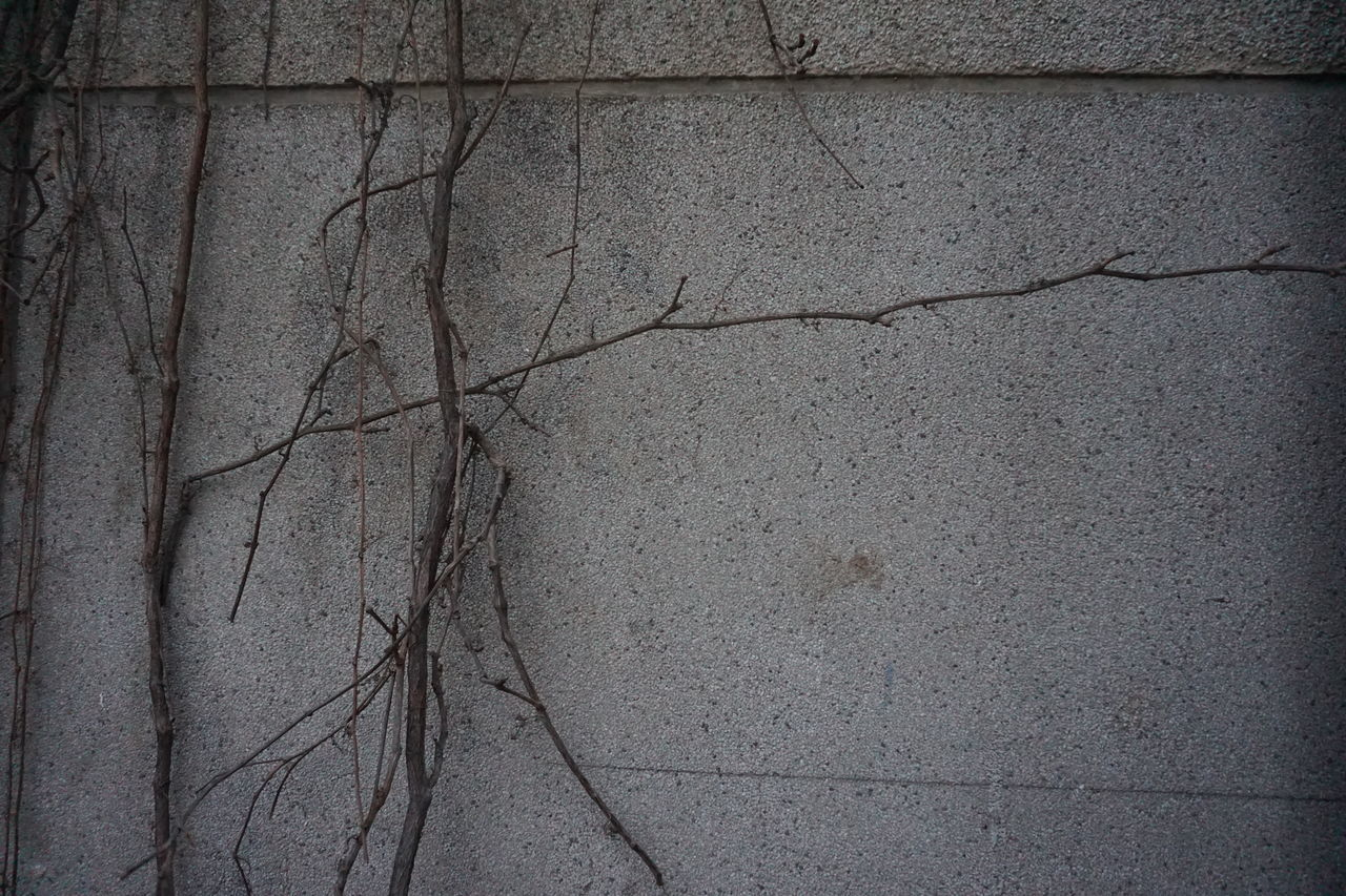 textured, backgrounds, cracked, no people, outdoors, close-up, day, nature, architecture