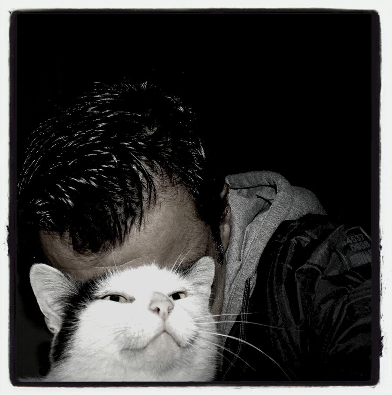 Cat Selfportrait Pintinhas Who Am I....?