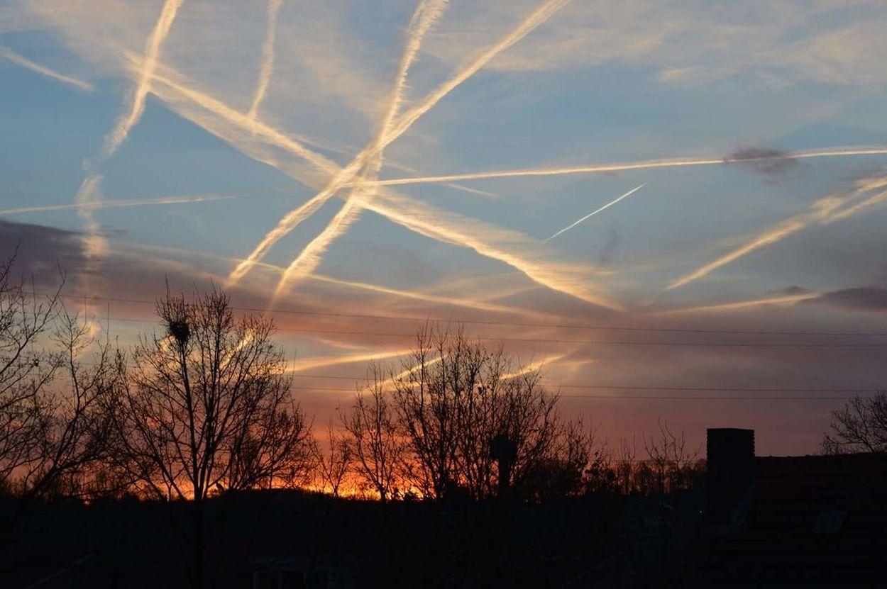 Sky Sunset Tree Outdoors Silhouette Cloud - Sky Chemtrails Whatthefuckaretheyspraying GeoEngineering Chemical Sky Chemical Sunset No Filtersor Effects