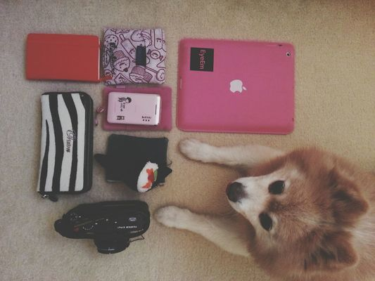 what's in my bag  in Sydney by @emmii