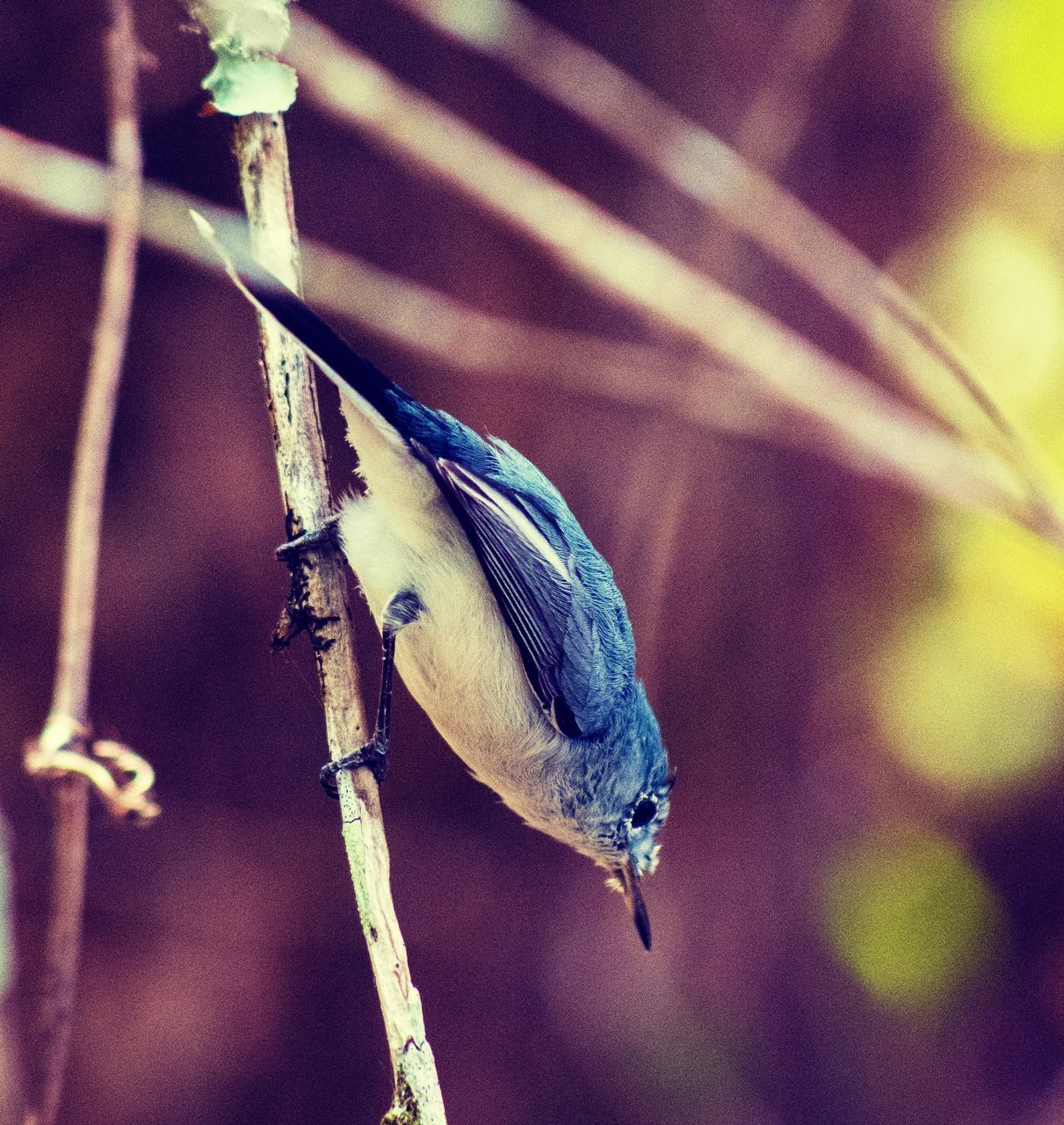 one animal, animals in the wild, animal themes, bird, perching, focus on foreground, animal wildlife, no people, close-up, nature, day, plant, outdoors, beauty in nature