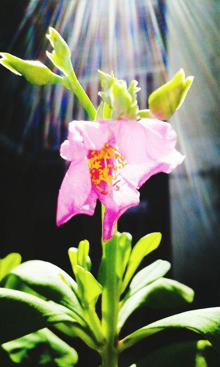 Enjoying Life Taking Photos Flowers,Plants & Garden Cute Colors First Eyeem Photo