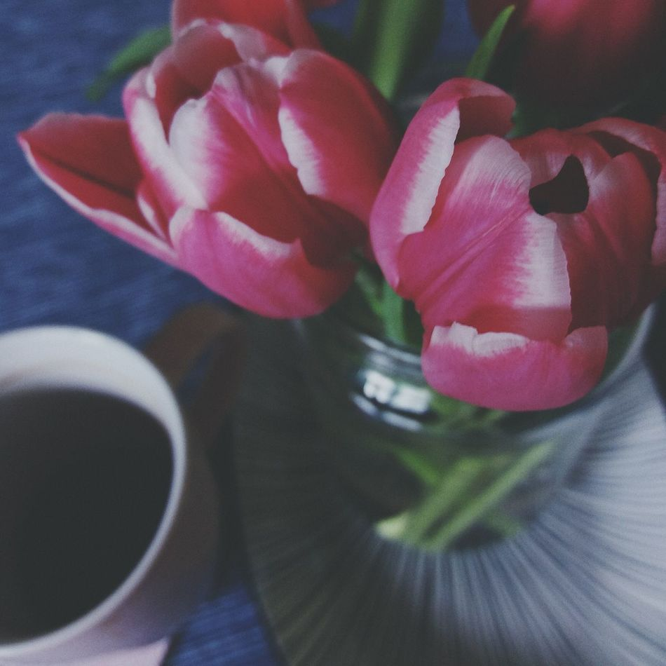 Flower Freshness Close-up Petal Flower Head No People Nature Day Beauty In Nature Fragility Indoors  Good Afternoon Tulips Spring Coffe And Flowers Coffee Time Pink Tranquility Enjoy My Home Colors Blooming Warm Colors Check This Out The Week On Eyem