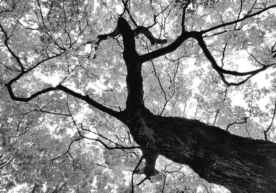 Celtis australis Trees Outdoors No People Nature Photography TreePorn Nature's Diversities Naturenaturelovers Botanical Gardens Botanik Peace ✌ Peace And Love ✌❤