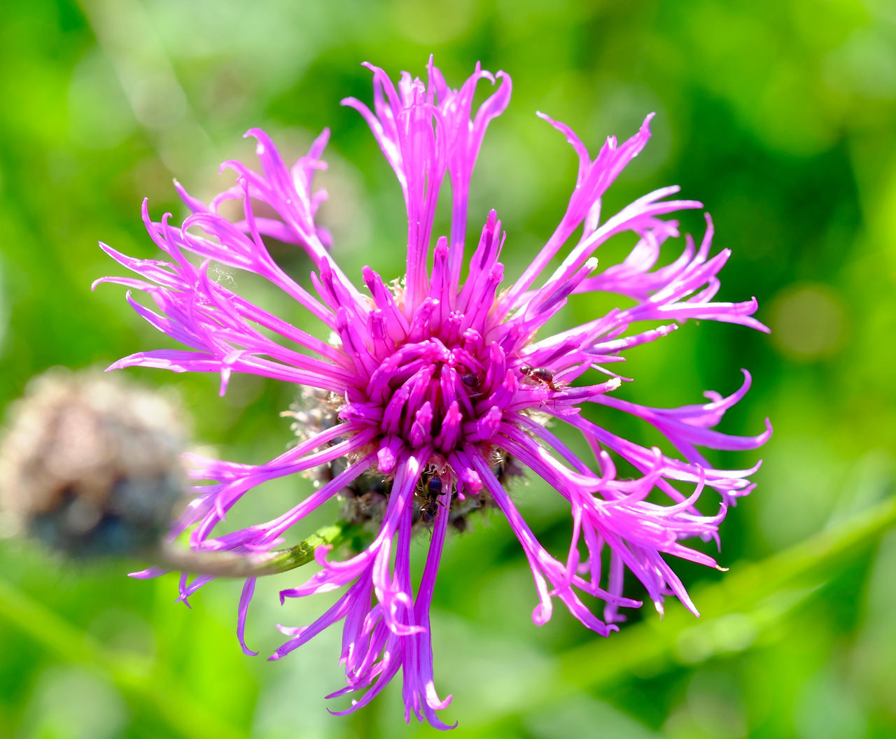 Blooming Close-up Flower Flower Head Fragility Freshness Growth Outdoors Petal Purple
